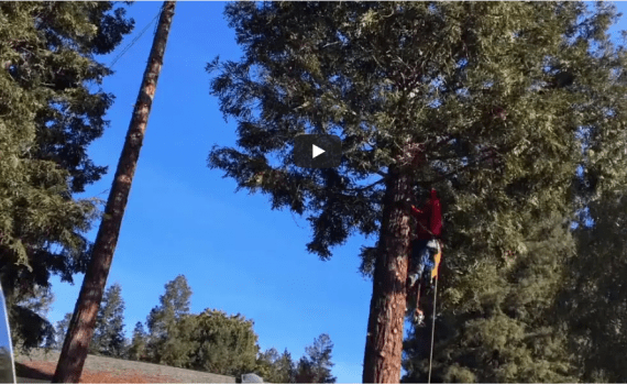 Berkeley Tree Removal