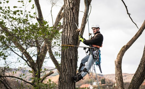Berkeley Tree Care