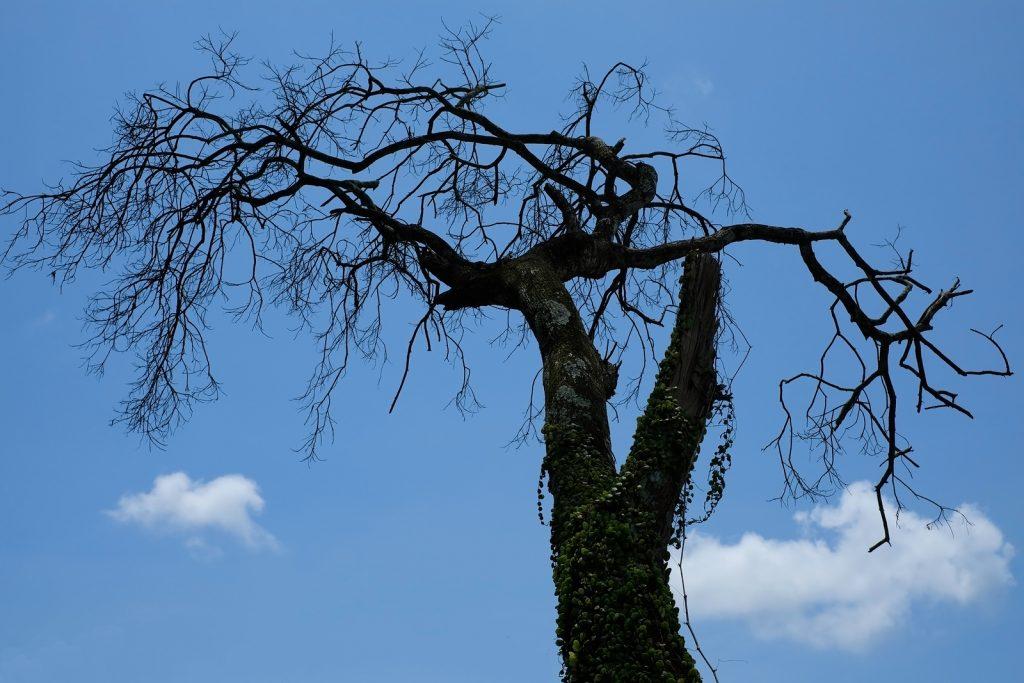 Tree Service Danville