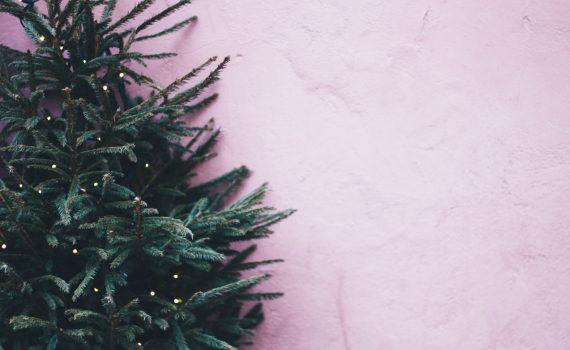 Concord Tree Care