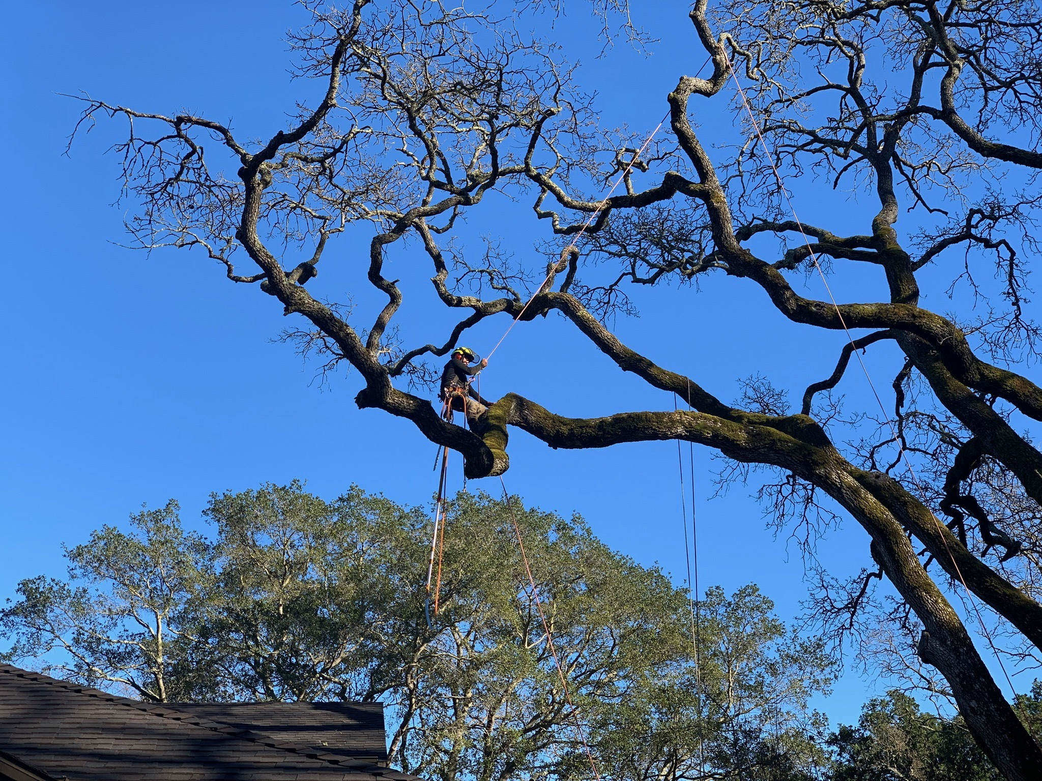 Tree Service Bay Area, Landing Page