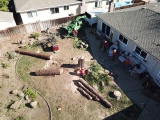 tree removal contractors